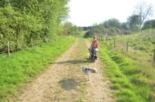A dog walk!