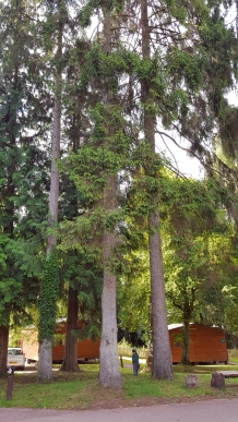 Our two huts under the enormous trees....