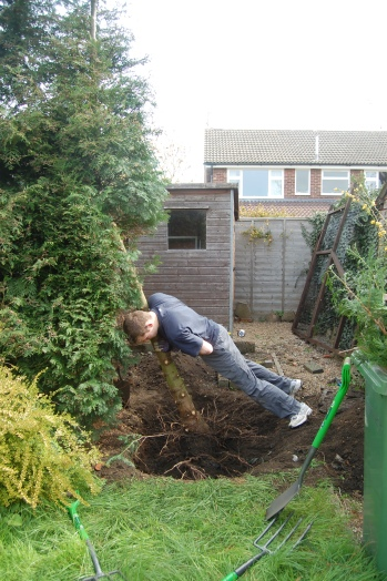 Digging out the trees..