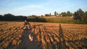 Sunny evening dog walks in our village