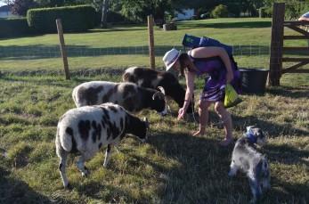 Feeding the Sheep!