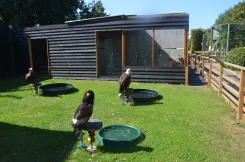 The Owl Sanctuary