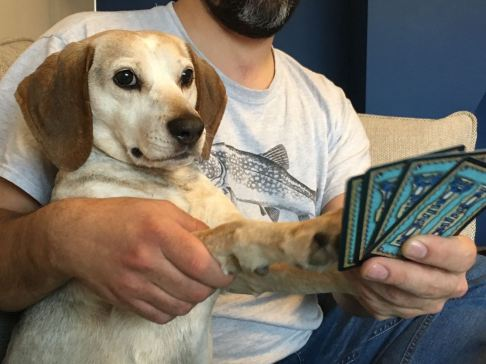 Lottie learning to play Dominion..