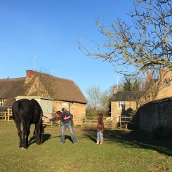 Visiting the local horses