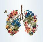 cc00d101fc265e26e8de9380ce6aa0ba--lungs