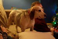 Lottie dog!