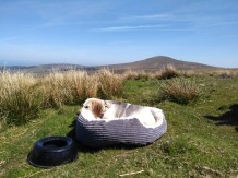 Lottie chilling in the hills
