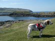 Lottie at the Calf of Man