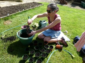 Potting up some seeds...