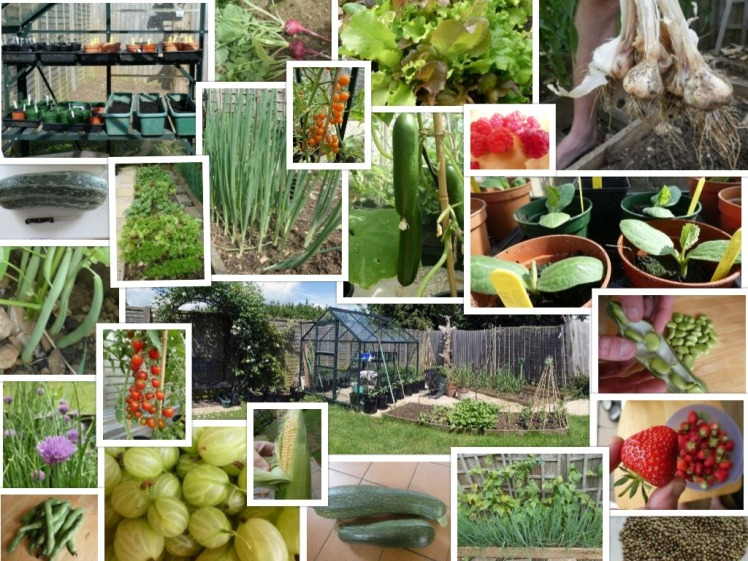 collagevegetables