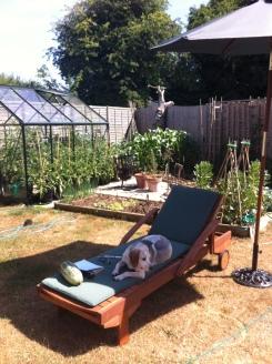 Lottie chilling in the sunshine!