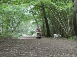 Stoke Wood dog walk