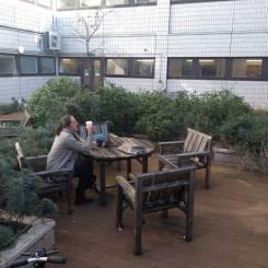 The roof garden at DDU