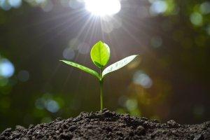 seedling-sun3559239747297184581.jpg