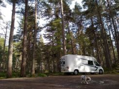 Wild camping at Forest near Loch Garten