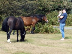 Baby Louis meeting the wild horses